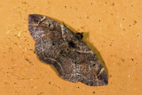 moth  9663.jpg