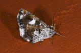 moth  9665.jpg