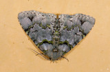 moth  9692.jpg
