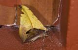 moth  9701.jpg