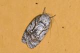 moth a 0767.jpg