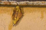 moth  g0791.jpg
