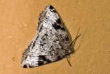 moth  g0812.jpg