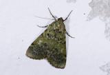 moth  n0820.jpg