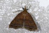 moth  n0822.jpg