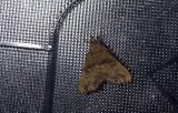 moth  0829.jpg