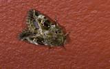 moth  n0830.jpg