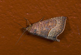 moth  0843.jpg