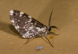 moth  0850.jpg