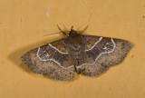 moth  g0863.jpg