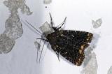 moth  9720.jpg