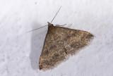moth  1033.jpg