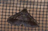 moth  1040.jpg
