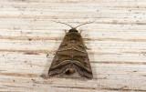 moth  n1065.jpg