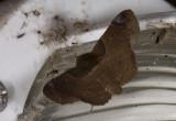 moth  s1145.jpg