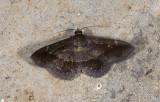 moth  n1148.jpg