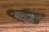 moth  n1162.jpg