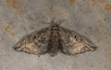 moth  s2000.jpg