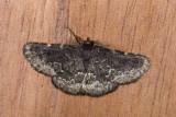 moth  n2005.jpg
