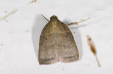 moth  2006.jpg