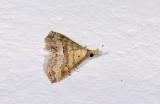 Erebidae; Boletobiinae; Mursa imitatrix?  2015.jpg
