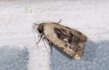 moth  2022.jpg
