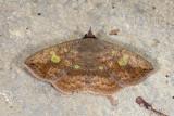 moth  2064.jpg