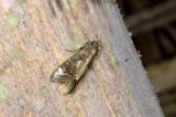 moth  2096.jpg