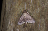 moth  2097.jpg