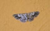 moth  8895.jpg