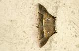 moth  0522.jpg