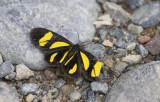 moth  2930.jpg