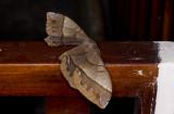 moth  4851.jpg