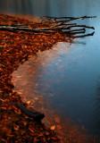 Algonquin Swamp