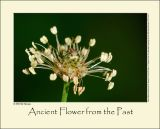 Ancient Flower from the Past