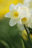20130424 - Another Daff