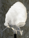 IMG_5170 Snowcapped Hummingbird, Nov 11