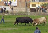 2011_03_09 Peruvian Bullfight in Arequipa