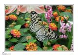 Papillons en liberté et en nature