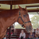 The thoroughbred racehorse Funny Cide