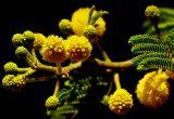 ex tiny yellow flowers mod.jpg