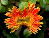ex snarling flower mod.jpg
