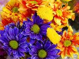 ex flowers mod.jpg