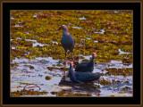 BIRDS IN GOA IN INDIA 3
