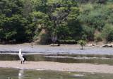 Puhoi River, New Zealand