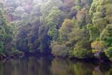 Pieman River, Tasmania