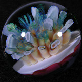Symphonic Reef Size: 1.13 Price: SOLD