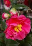 Missouri Botanical Gardens 021313