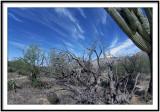 Desert Cycle