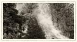 Forest Fire Regeneration mono
